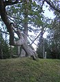 Neeruti nature reserve - panoramio.jpg
