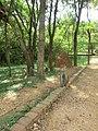New Town, Polonnaruwa, Sri Lanka - panoramio (15).jpg