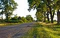Nizhyns'kyi district, Chernihivs'ka oblast, Ukraine - panoramio (4).jpg