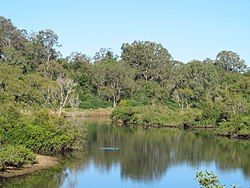 North Pine River at Petrie 2.jpg