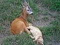 Odessa zoo 3.jpg