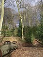 Old lime pit in Bardolph's Wood - geograph.org.uk - 348419.jpg