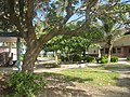 On the Campus of Kwajalein Atoll High School.jpg