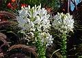 Ontario Flowers (13) (23300801982).jpg