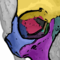 The seven orbital bones of the skull
