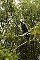 Oriental Darter Anhinga melanogasterfrom Ranganathittu Bird Sanctuary JEG4417.JPG
