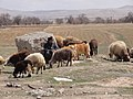 Oshtorinan, Lorestan Province, Iran - panoramio (1).jpg