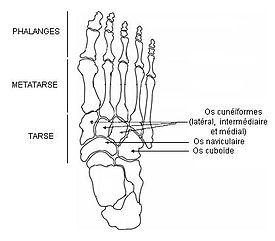 os des pieds