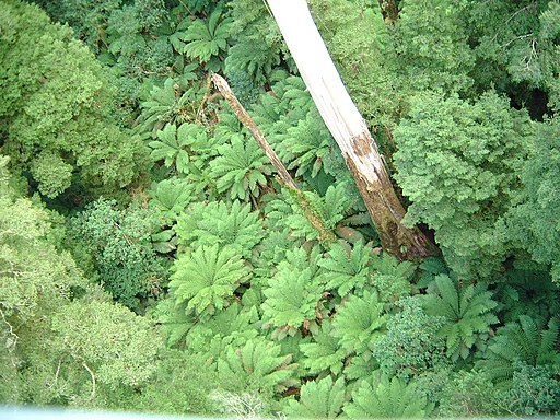 Otway Fly Tree Top Walk (927172687)
