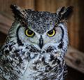 Owls @ Dragonheart, Enschede (9546754993).jpg