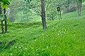 Přírodní památka V Krátkých, okres Uherské Hradiště.jpg
