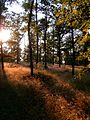 Přírodní park Baba390.jpg
