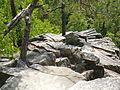 Přírodní rezervace Čertova stěna 1 (3).jpg
