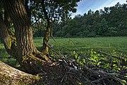 Přírodní rezervace Skalské rašeliniště (02).jpg