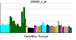 PBB GE DTNA 208430 s at tn.png