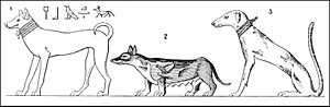 Tesem - Examples of three different types of dogs shown on Egyptian monuments