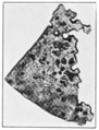 PSM V83 D033 The spread of tin disease in a sheet of tin.png