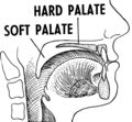 Palate 2 (PSF).png