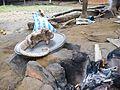 Pangolin du Cameroun 05.jpg