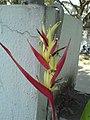 Parakeet flower (326976547).jpg