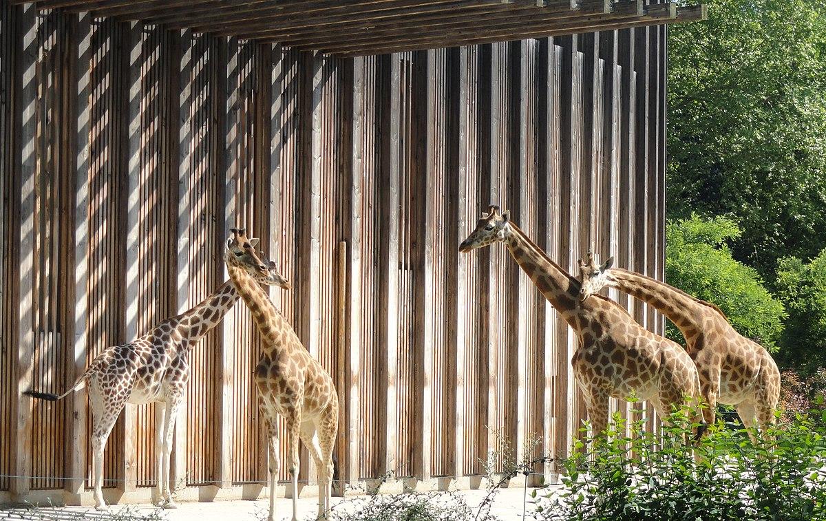 Jardin zoologique de lyon wikip dia for Jardin lyon