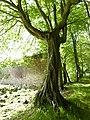 Parc et jardin du château de Bogard 05.jpg