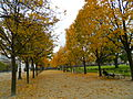 Paris 75001 Jardin des Tuileries east part towards Pavillon de Marsan in autumn 02.jpg