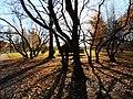 Park Sakharov - panoramio (2).jpg