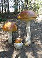 Park grzybowy w Pilce (Leccinum aurantiacum).JPG