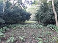 Parmadan Forest 21.jpg