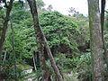 Parque Gustavo Knoop 008.jpg