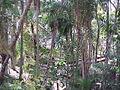 Parque Gustavo Knoop 009.jpg