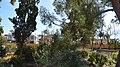 Parterre botanico.jpg
