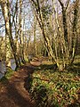 Path by the Teign - geograph.org.uk - 1773961.jpg