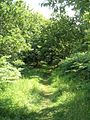 Path in Dufton Ghyll Woods - geograph.org.uk - 771397.jpg
