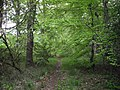 Path to Cuddie Wood - geograph.org.uk - 1386723.jpg