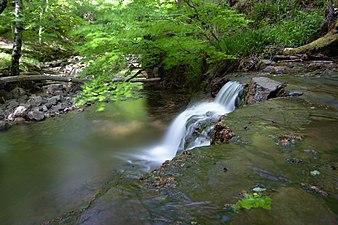 Pequeña cascada en el río Argoza.jpg