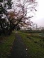 Pequeno caminho - panoramio.jpg