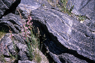 Perlite - Perlite boulders with fireweed in foreground