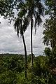 Perspektiven des Parque nacional Iguazú 16 (21494762633).jpg