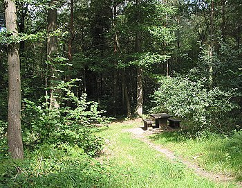 English: Picnic Area in Haugh Woods Such a lov...
