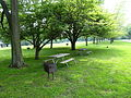 Picnic area at Ohio's Van Buren State Park.JPG
