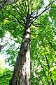 Pidhorodne-modryna-n1-15058023.jpg
