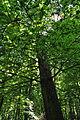 Pidhorodne-modryna-n2-15058070.jpg