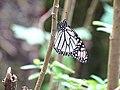 Piedra Herrada - Monarch Butterfly Sanctuary - Near Valle de Bravo - Mexico - 08 (16494753212).jpg
