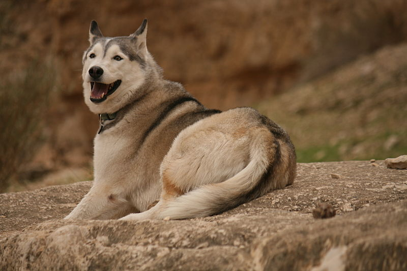 כלב בנחל דרגות