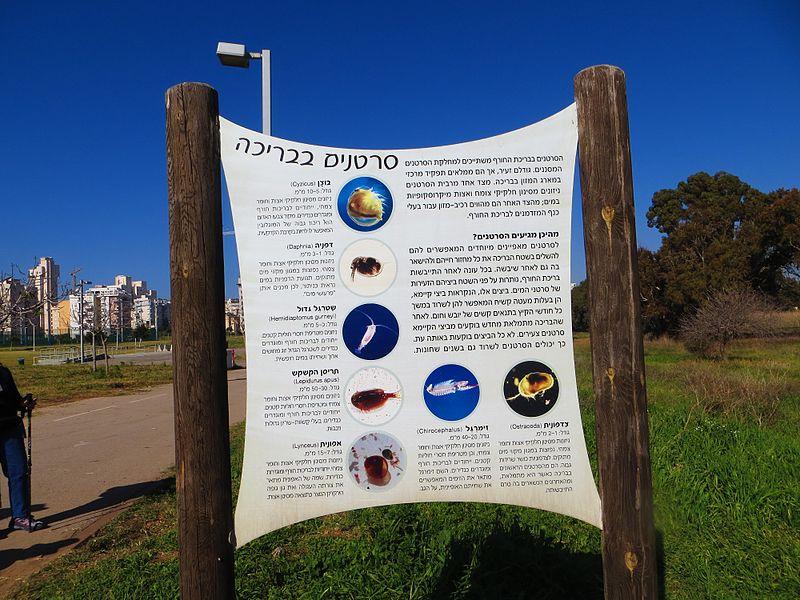 פארק השלולית בנתניה