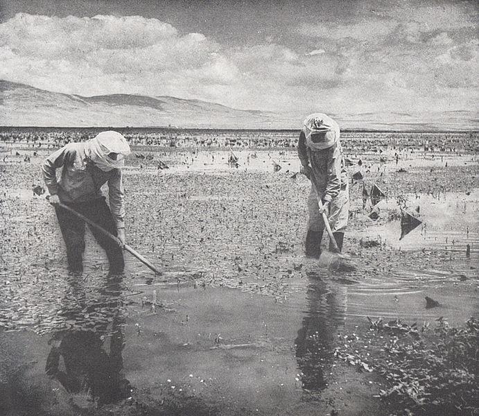 ביצות בעמק החולה