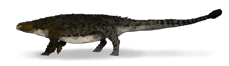 Pinacosaurus grangeri