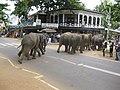 Pinawale Elephant Orphanage (7568436968).jpg